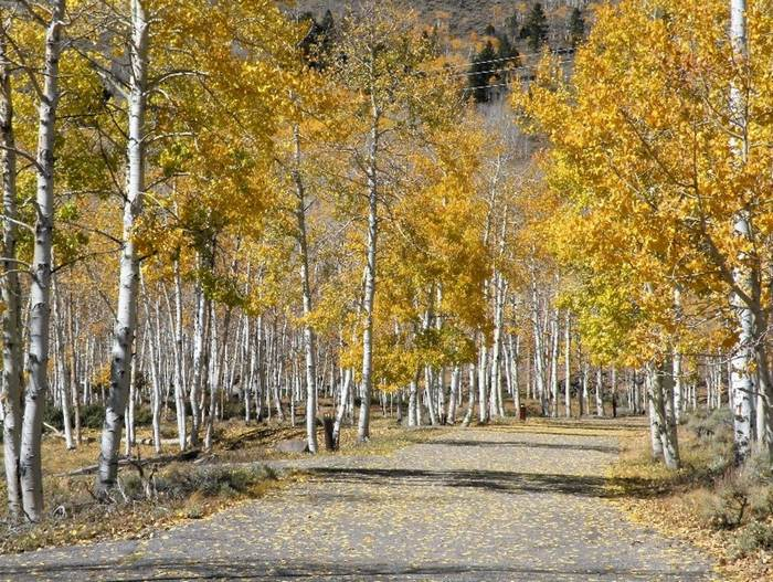 5 Must Do Fall Family Activities in Utah